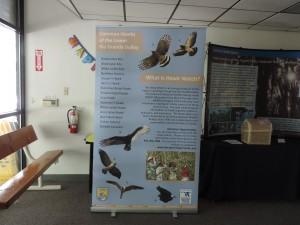 Hawk-Watch-poster