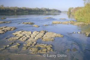 KangoMedia Art - Rio Grande Chapeno - Larry Ditto